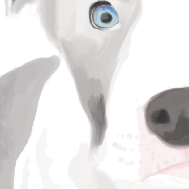 Blue eye pitbull detail