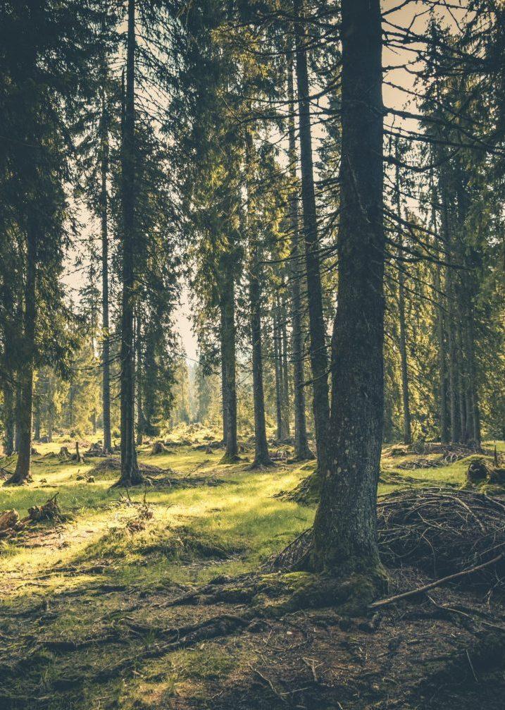 Riforestazione Ambientale