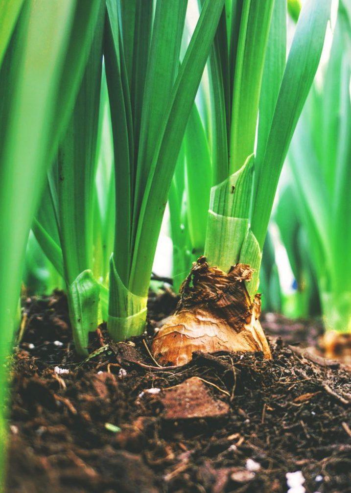 orti e permacultura